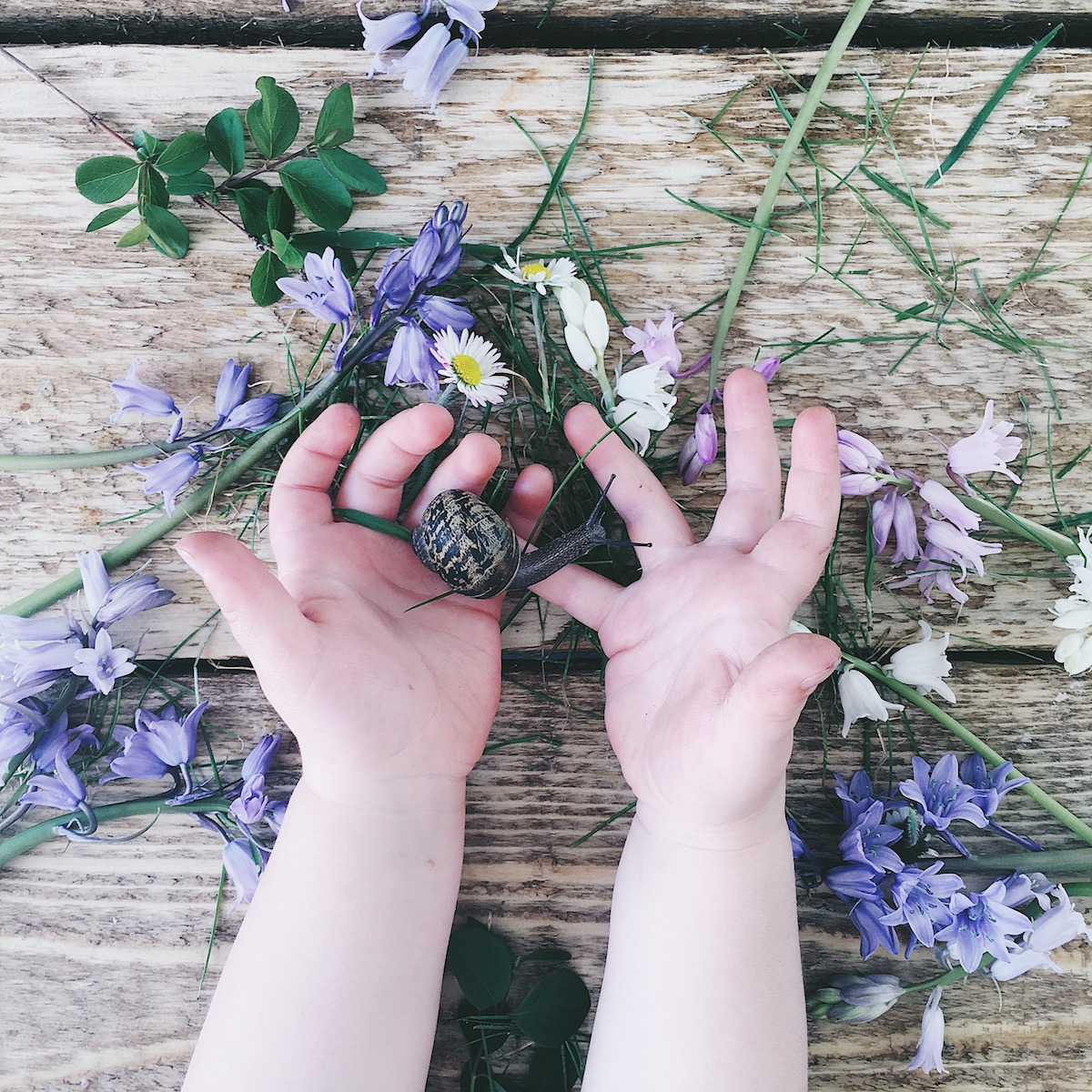 Ideas for Instagram photo prop ideas & hashtags - wildlife and flowers